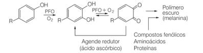 Reação de oxidação de compostos fenólicos catalisada pela polifenol oxidase