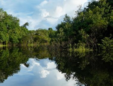 A mata de igapó localiza-se à margem dos grandes rios e está sempre inundada