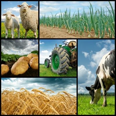 Exemplos de imagens do setor primário da economia