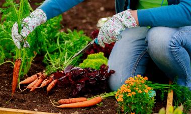 Os agrossistemas alternativos visam à preservação e à produção de alimentos saudáveis