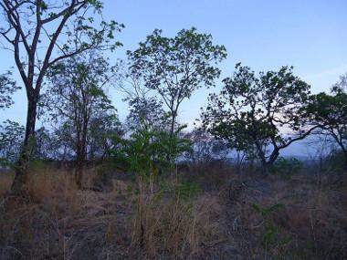 Paisagem típica do Cerrado brasileiro **