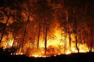 O aumento da temperatura aumenta ainda mais a velocidade dos incêndios florestais