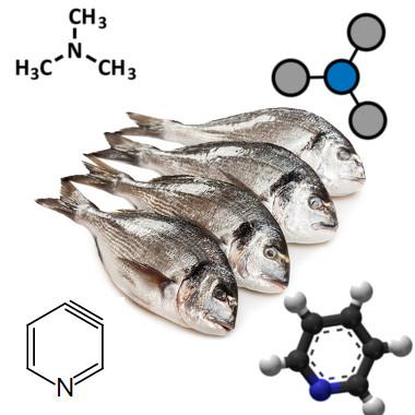 A trimetilamina e a piridina são responsáveis pelo cheiro de peixe podre