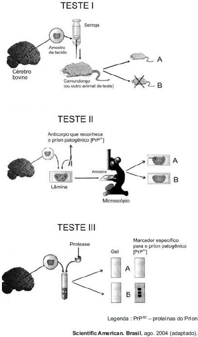 Observe atentamente os três testes ilustrados