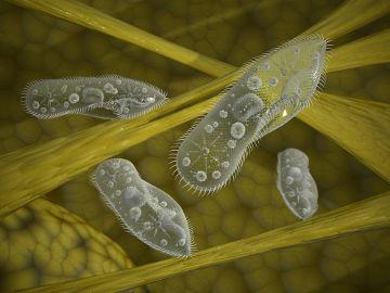Os protozoários fazem parte do reino Protoctista