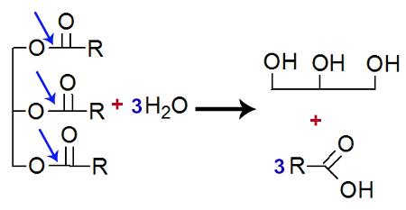 Equação representando a quebra de um triglicerídeo