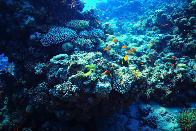 Os recifes de corais constituem um dos principais ecossistemas do planeta