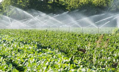 A irrigação é uma das técnicas agrícolas que permitem o controle da produção e da produtividade, independentemente de fatores naturais