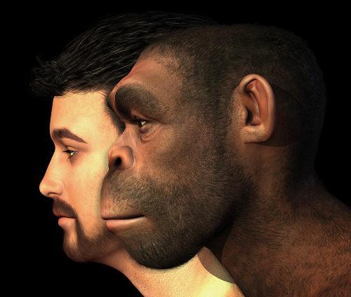 Na figura, é possível observar uma representação do homem moderno e do Homo erectus