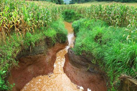 O manejo do solo nas áreas agrícolas, quando realizado de maneira errada, agrava o assoreamento