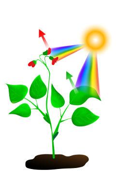 Planta sob luz solar