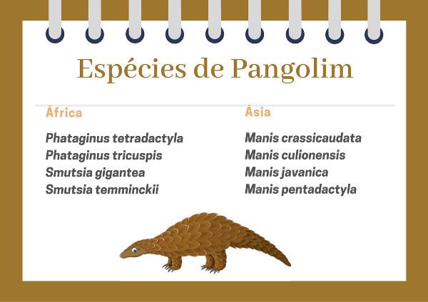 Conheça as espécies existentes de pangolim