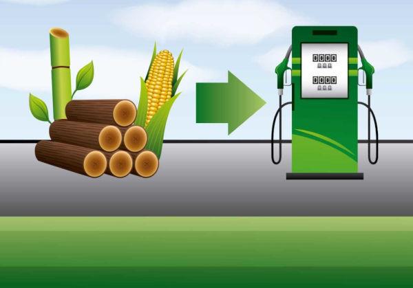 Biocombustíveis são produzidos por meio da queima de produtos da biomassa, como plantas e madeiras.