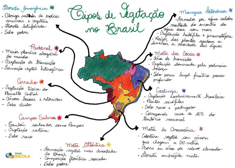 Mapa Mental:. Tipos de Vegetação no Brasil