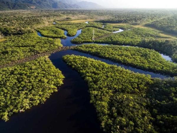 O bioma Amazônia representa um conjunto de diferentes ecossistemas e ocupa grande parte do território brasileiro.