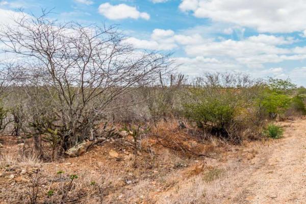 A vegetação da Caatinga caracteriza-se pela perda das folhas no período de seca.