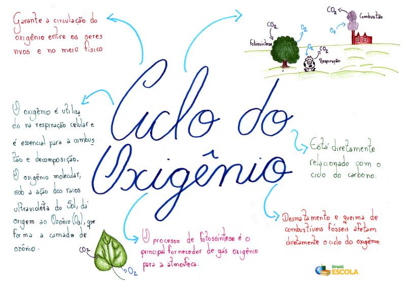 Ciclo Do Oxigênio Etapas Do Ciclo Do Oxigênio Brasil Escola