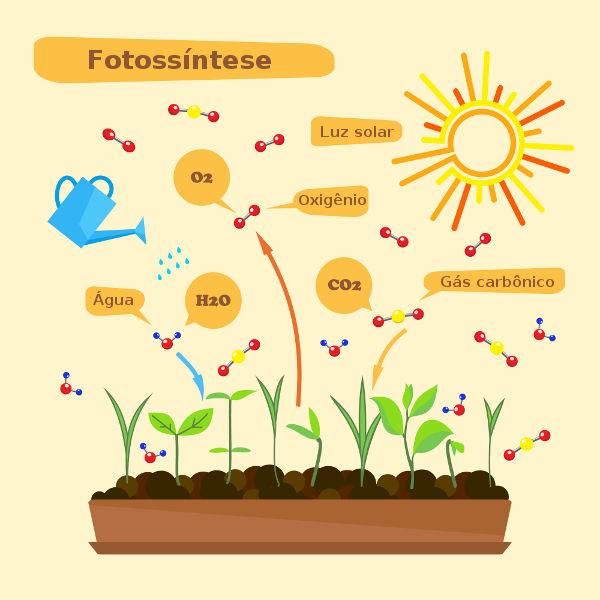 A fotossíntese é uma das principais etapas do ciclo do oxigênio.