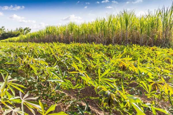 A alternância de culturas propicia diversos benefícios, como a produção diversificada e a conservação do solo.