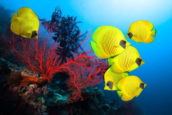 O branqueamento dos corais pode afetar drasticamente a biodiversidade local.