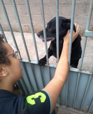 Local destinado para a acomodação de cães que necessitam de cuidados diferenciados na Acãochego
