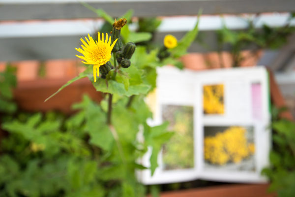 A Botânica é uma das áreas de estudo da Biologia.