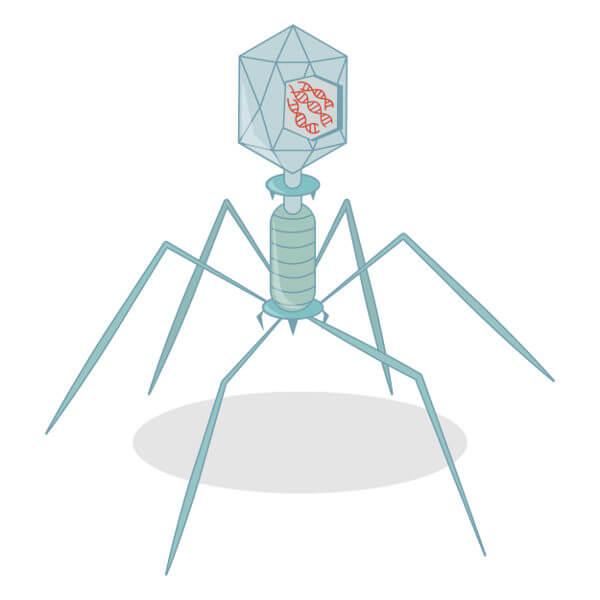 Os vírus são estruturas formadas por uma cápsula que envolve o material genético.
