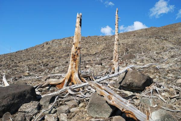 A destruição da vegetação é uma das principais consequências da chuva ácida.
