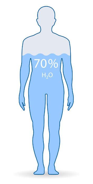 O corpo humano é formado por cerca de 60% a 75% de água.