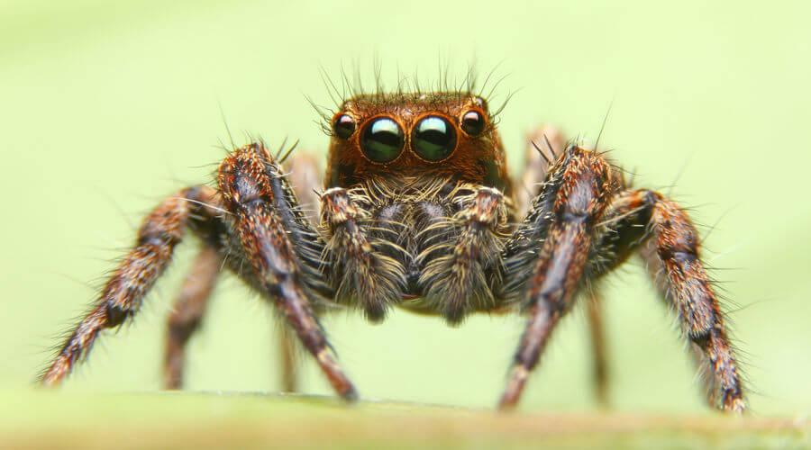 As aranhas podem ser perigosas, sendo algumas responsáveis por acidentes graves.
