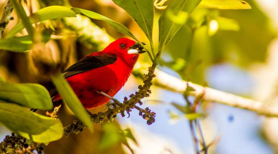 Os pássaros são aves que apresentam algumas características marcantes, como pé anisodáctilo.