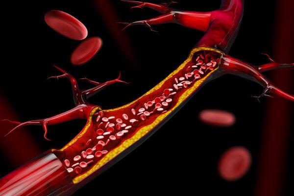 Os vasos sanguíneos são responsáveis por garantir o transporte de sangue pelo corpo.