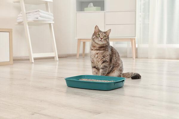 As fezes do gato são responsáveis por liberar oocistos no meio ambiente.