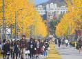 coreia-university